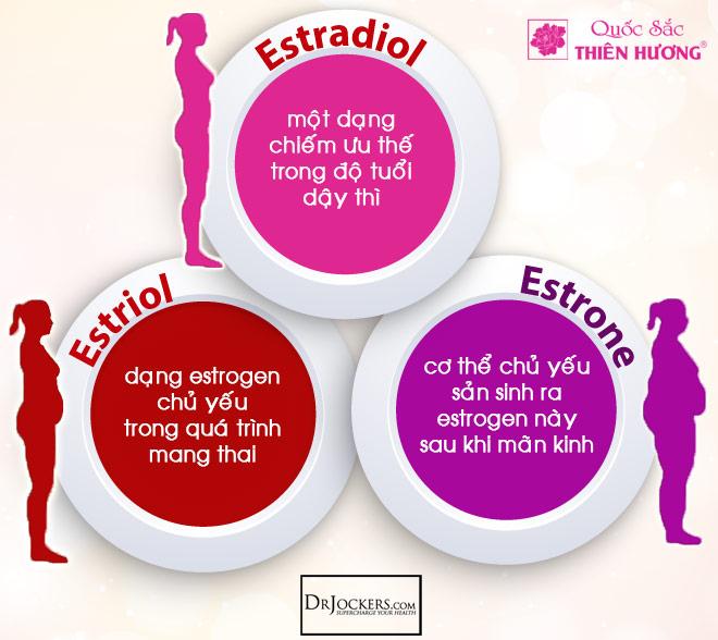 Ba loại estrogen trong cơ thể người phụ nữ