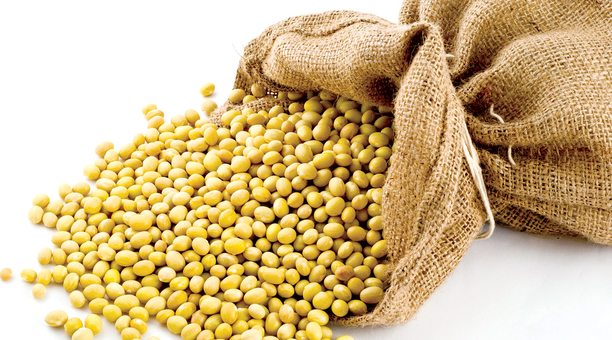 Mầm đậu nành có gấy tăng cân béo phì không?